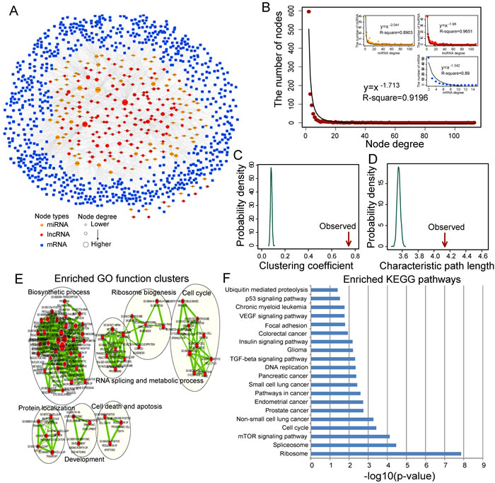 Ovarian cancer-specific lncRNA-associated ceRNA network and their characteristics.