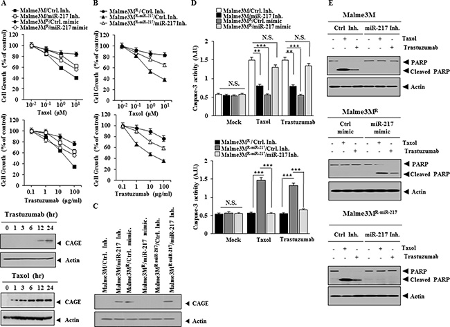 miR-217 regulates the response to anti-cancer drugs.