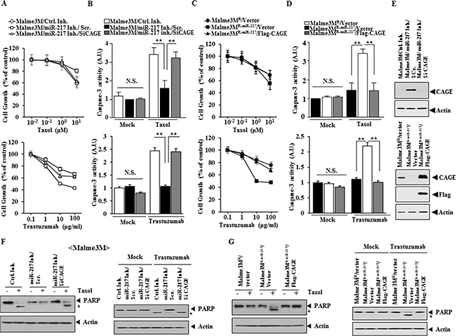 miR-217 and CAGE cross regulate each other and exert opposite regulations on the response to anti-cancer drugs.