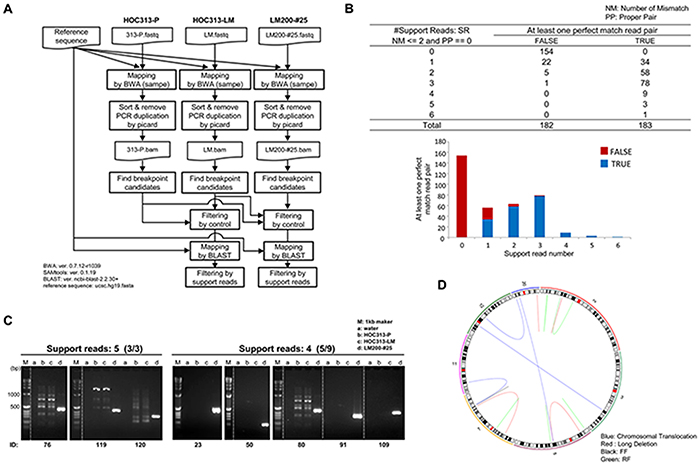 Whole genome sequencing analysis identified microbeam irradiation-induced de novo chromosomal rearrangements.