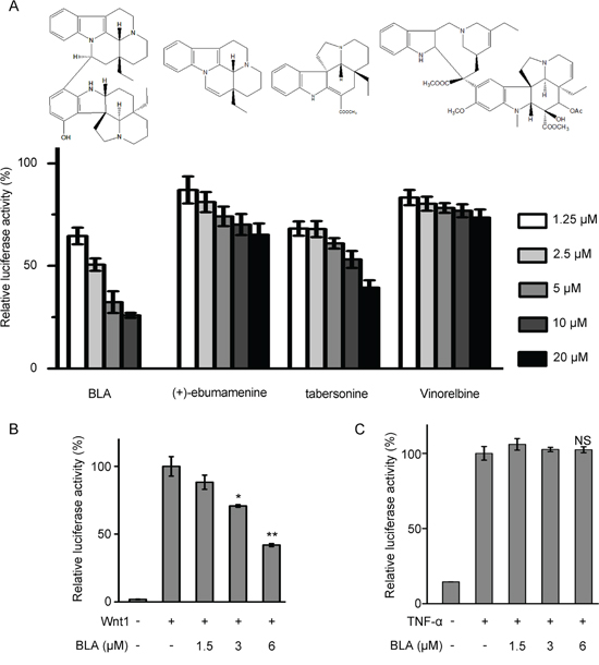 Bisleuconothine A is a potent and selective inhibitor of the canonical Wnt pathway.