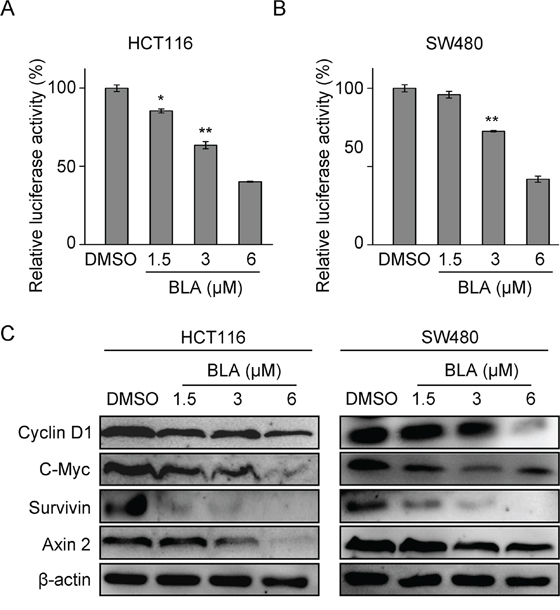 Bisleuconothine A attenuates the canonical Wnt pathway in colorectal cancer cells.