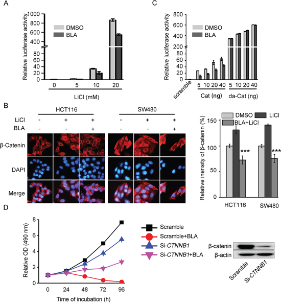 Bisleuconothine A attenuates the canonical Wnt pathway in colorectal cancer cells at the level of or upstream the destruction complex.