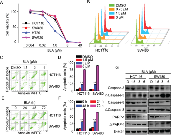 Bisleuconothine A inhibited cell proliferation through induction of apoptosis by increasing the cleavage of caspases in colorectal cancer cells.