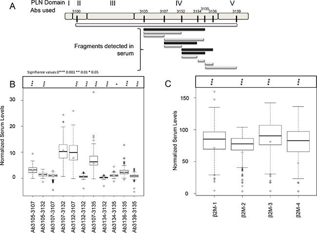 Sandwich ELISA detection of perlecan and β2-microglobulin (β2M) in serum.