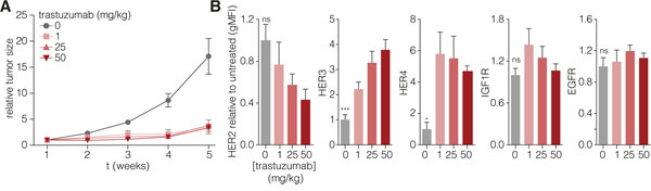 HER2 targeting in vivo induces resistance and concomitant upregulation of HER3.