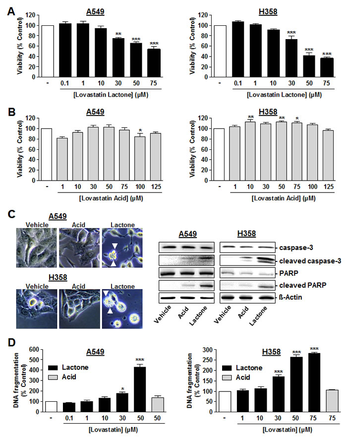 Figure 1 : Effect of lovastatin lactone and lovastatin acid on cellular viability and apoptosis of A549 and H358 cells.