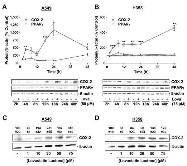 Effect of lovastatin lactone on COX-2 and PPARγ protein expression in A549 and H358 cells.