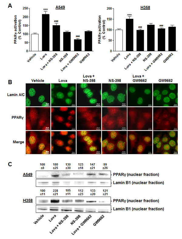 Impact of COX-2 and PPARγ inhibition on PPARγ translocation in A549 and H358 cells.