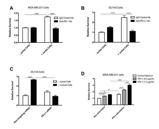 Jurkat T cells increase PD-1/PD-L1-mediated drug resistance in tumor cells.