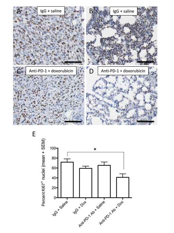 Effect of anti-PD-1 and doxorubicin combination treatment on cell proliferation