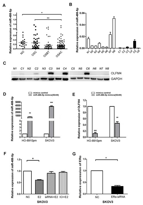 Estrogen regulates the expression of miR-486-5p, which targets OLFM4.