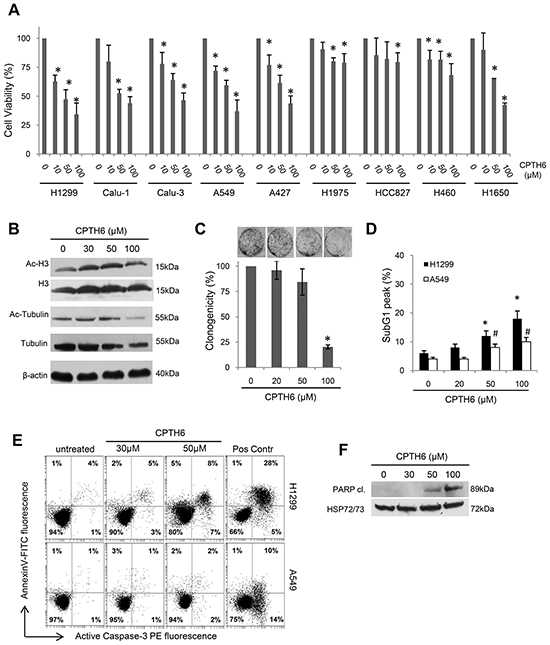 CPTH6 inhibits in vitro cell viability of human NSCLC cell lines.
