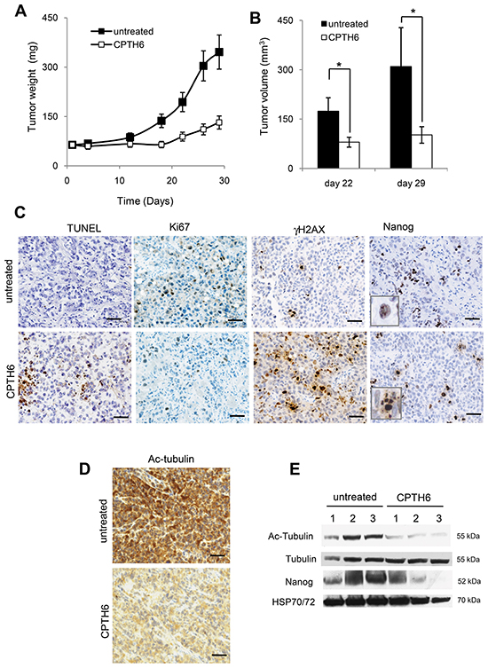 CPTH6 reduces the in vivo growth of LCSCs-derived tumor xenografts.