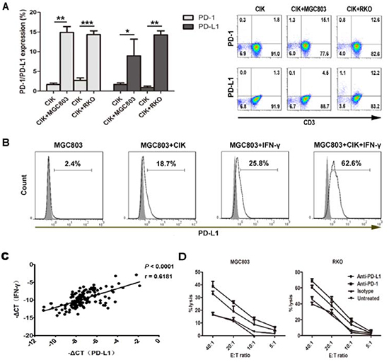 PD-L1/PD-1 pathway blockade efficiently increases tumor-killing activity of CIK cells.