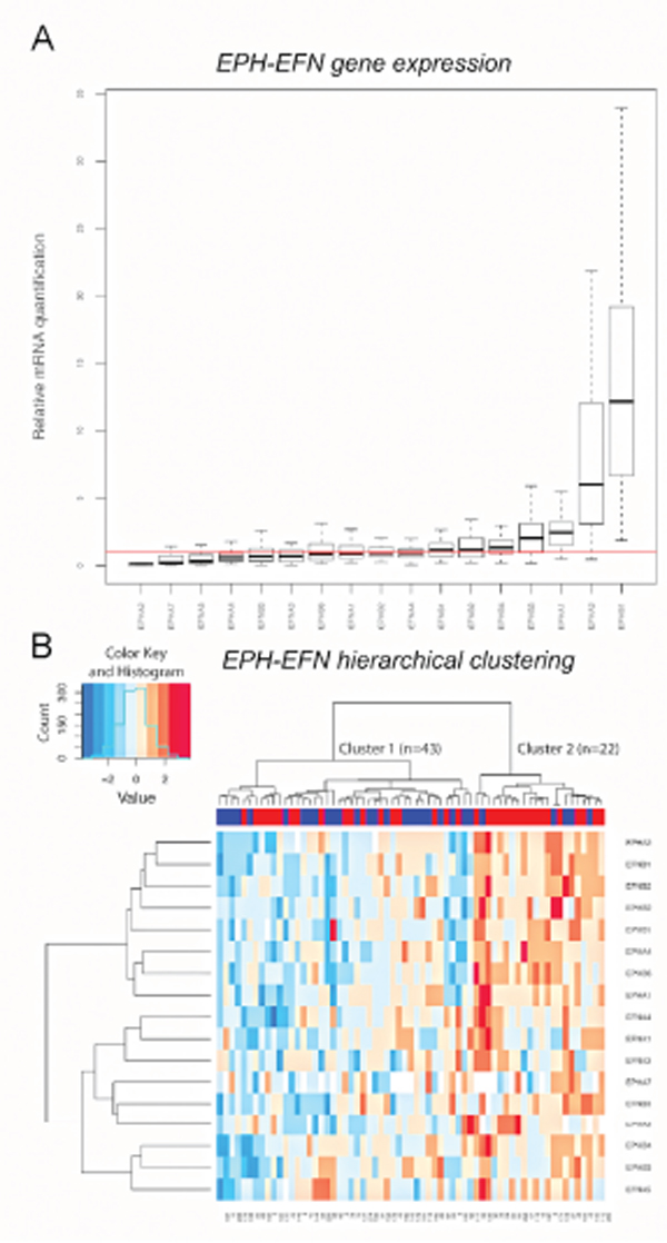 EPH/EFN mRNA expression in breast cancer patients with lymph nodal infiltration.