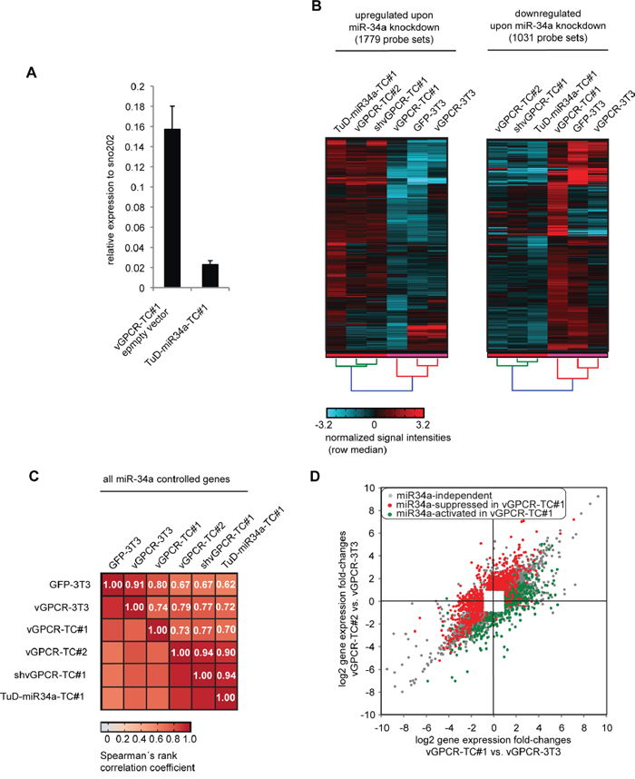 Identification of miR-34a-regulated genes in vGPCR-TC#1 cells by using a Tough Decoy RNA-mediated knockdown approach.