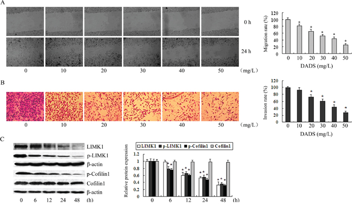 The downregulation of LIMK1 and p-LIMK1 by DADS occurred concomitantly with the inhibition of MGC803 cell migration and invasion.