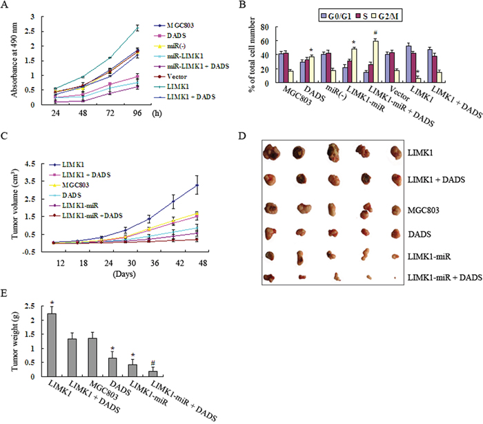 Effects of LIMK1 knockdown and overexpression on the DADS-induced inhibition of growth in MGC803 cells in vitro and in vivo.