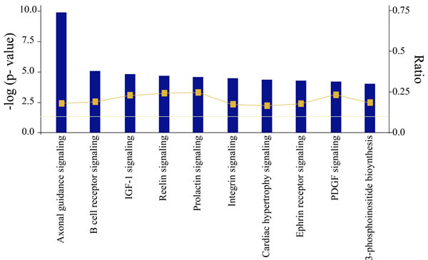 Most significant canonical pathways of putative target genes