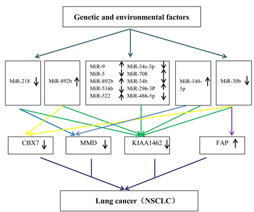 A hypothetical model to explain the molecular mechanisms of NSCLC based on enrolled data sets.