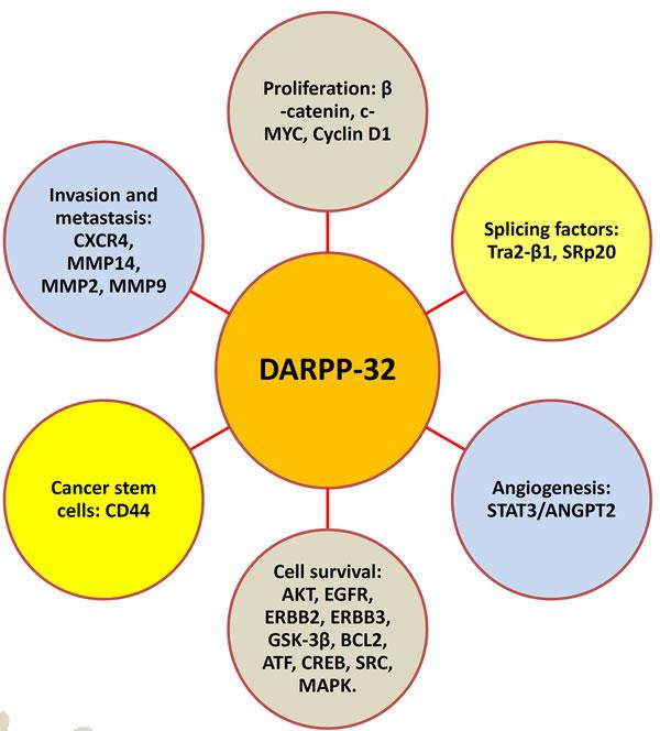 DARPP-32 regulates major hallmarks of tumorigenesis.