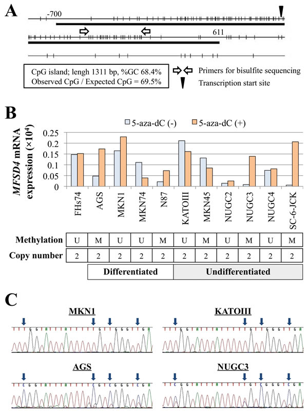 Expression, methylation and gene copy-number analysis.
