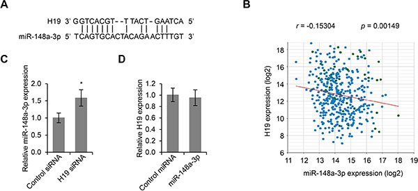 MiR-148a-3p is an inhibitory targeted of H19.