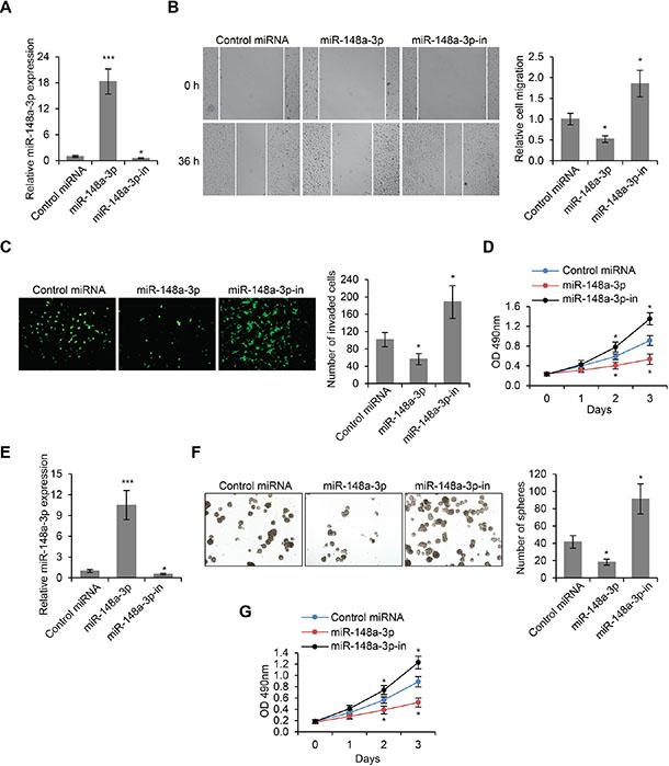 MiR-148a-3p is an inhibitor of LSCC development.