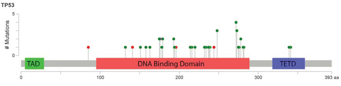 Lollipop figure of TP53 mutations detected in 168 patients with MDS and CMML.