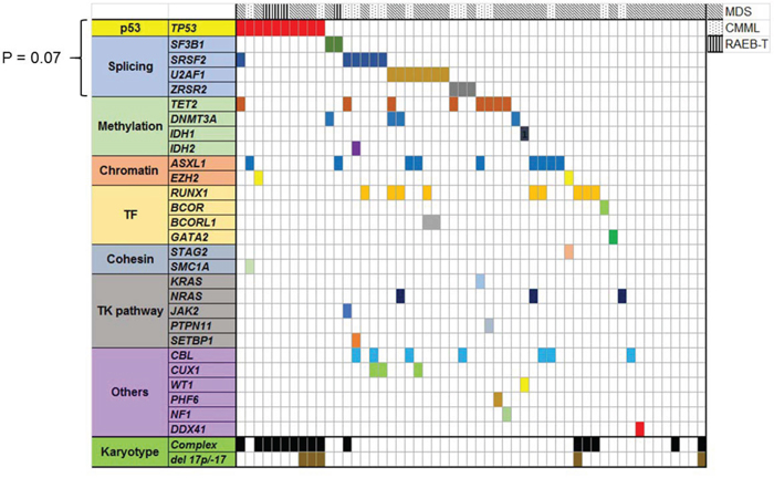 Landscape of well characterized myeloid driver mutations in 53 MDS/CMML patients whose bone marrow samples were sequenced by WES.