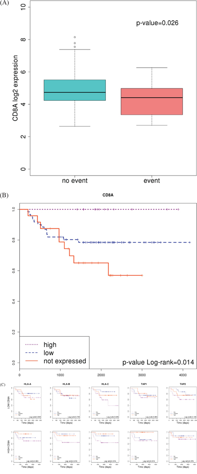 Association of CD8A expression with prognosis.