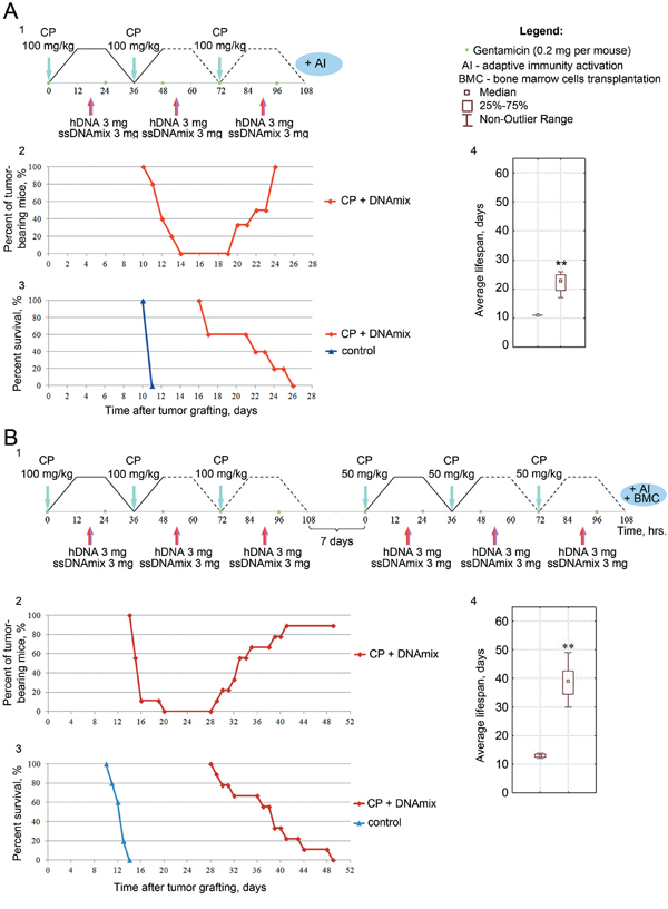 Analysis of a synergistic activity of CP and hDNA+ssDNA+ICL-ssDNA mixture against the ascites form of Krebs-2 tumor in mice.