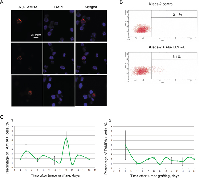 Cytofluorescence A. and flow cytometry B. analyses of Alu-TAMRA DNA internalization by TISCs present in Krebs-2 ascites.