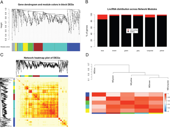 Gene co-expression network analysis of differentially expressed genes.