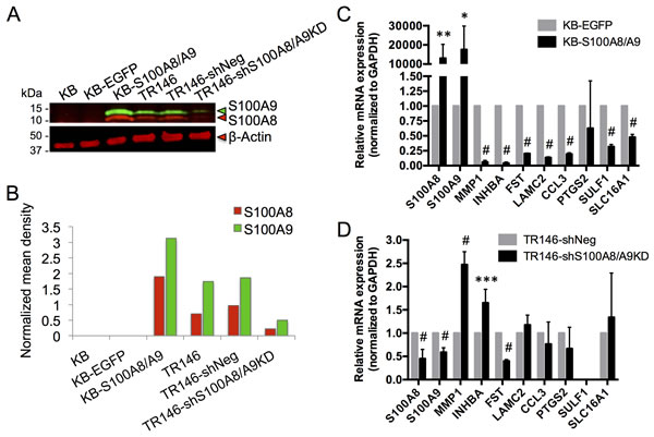 Expression of S100A8, S100A9 and putative marker genes in KB and TR146 cells.