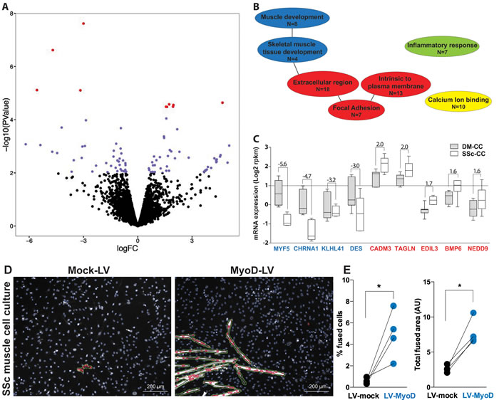 RNA expression profiles in deltoid and subscapularis muscle-derived cell cultures.