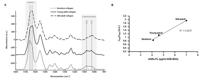ATR-FTIR analysis of 3D matrices as a function of collagen age.
