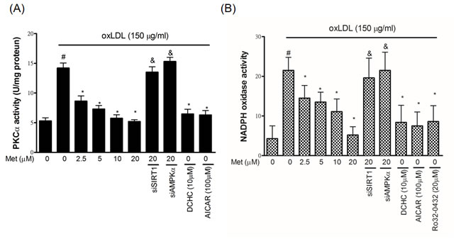 Metformin protects against oxLDL-induced PKCα and NADPH oxidase activation in endothelial cells.