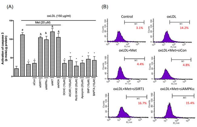 Metformin prevents oxLDL-induced endothelial apoptosis.