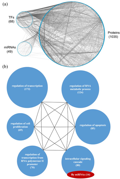 (a) The GEN of young individuals and (b) the associated functional network.
