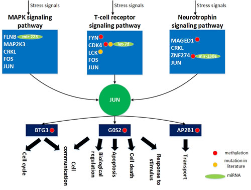 The role of miRNA regulation and DNA methylation on the human aging mechanism based on the specific core GEN of the elderly.