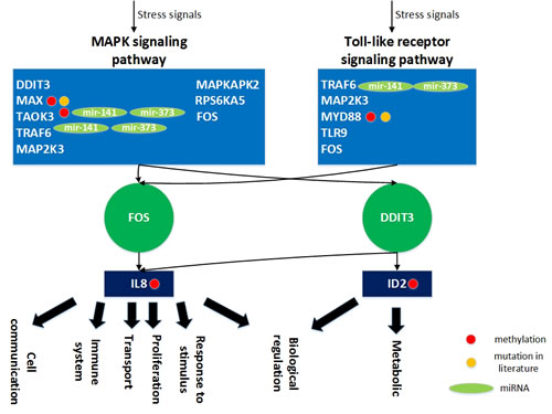 The role of miRNA regulation and DNA methylation on gender specific aging mechanisms based on the specific core GEN of old women.