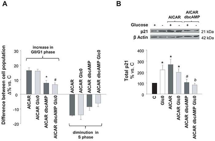 Effects of simultaneous AMPK and PKA activation on cell cycle progression.