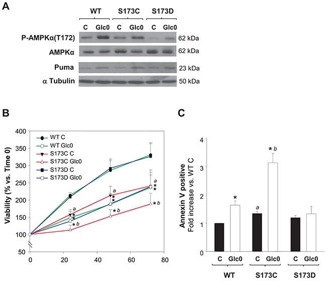 Disruption of AMPKα1(S173) increases cell death during glucose starvation in hepatocarcinoma derived cells.