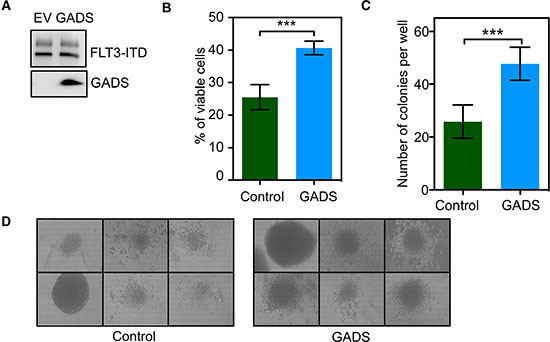 GADS expression significantly contributed to cell proliferation and colony formation.