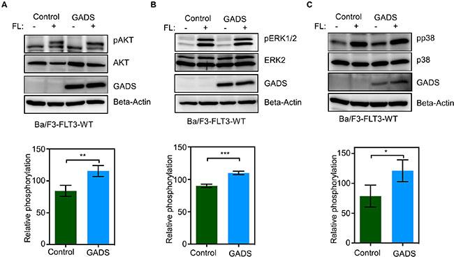 GADS expression enhances FLT3-induced signaling.