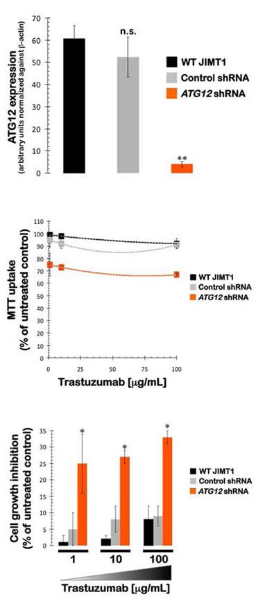 Impact of shRNA-driven genetic ablation of ATG12 on the efficacy of the anti-HER2 monoclonal antibody trastuzumab (Herceptin) in vitro.