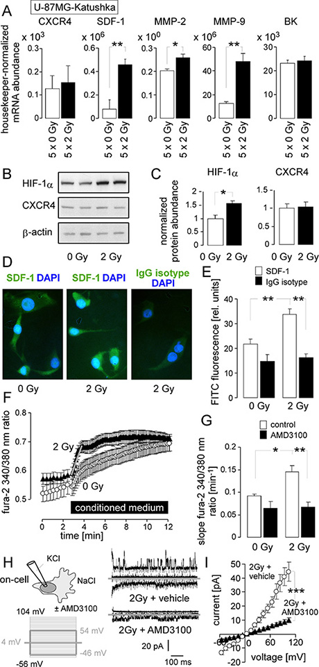 IR stimulates a migratory and invasive phenotype in U-87MG-Katushka cells probably via stabilization of HIF-1α, upregulation of SDF-1, CXCR4-mediated Ca2+ signaling and BK channel activation.