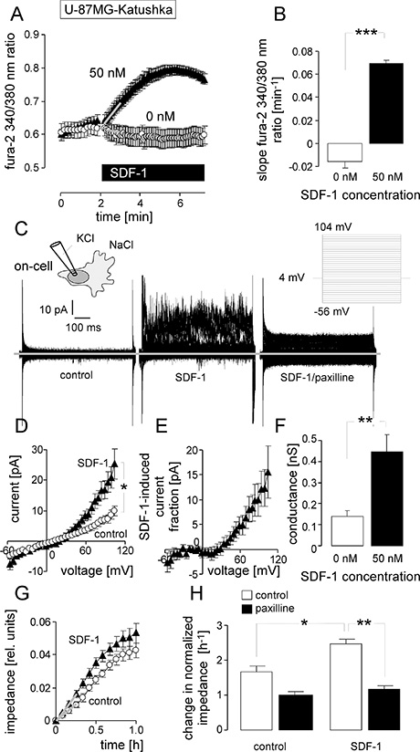 Stimulation with the chemokine SDF-1 mimics the effect of IR on BK channel activity and transfilter migration in U-87MG-Katushka cells.